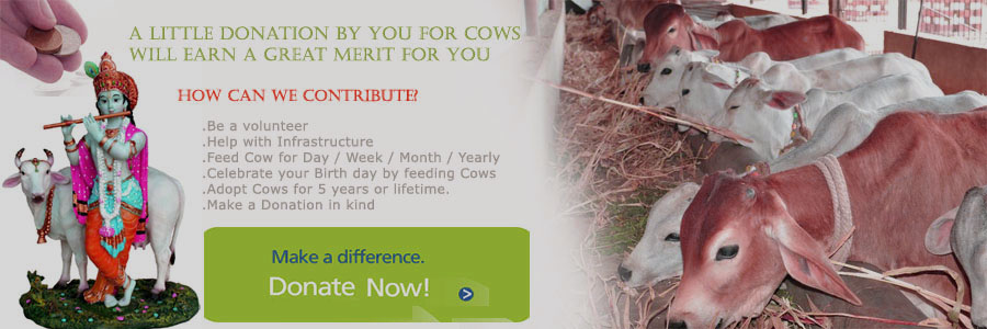 donate for cows, financilly support to goushala